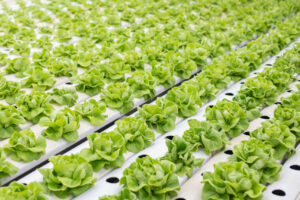 hydroponic-most productive technology for the future of farming